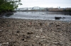 Low tide at Maspeth Creek, 49th Street