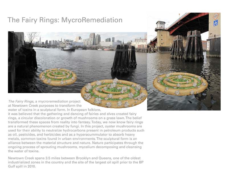 Fairy Rings